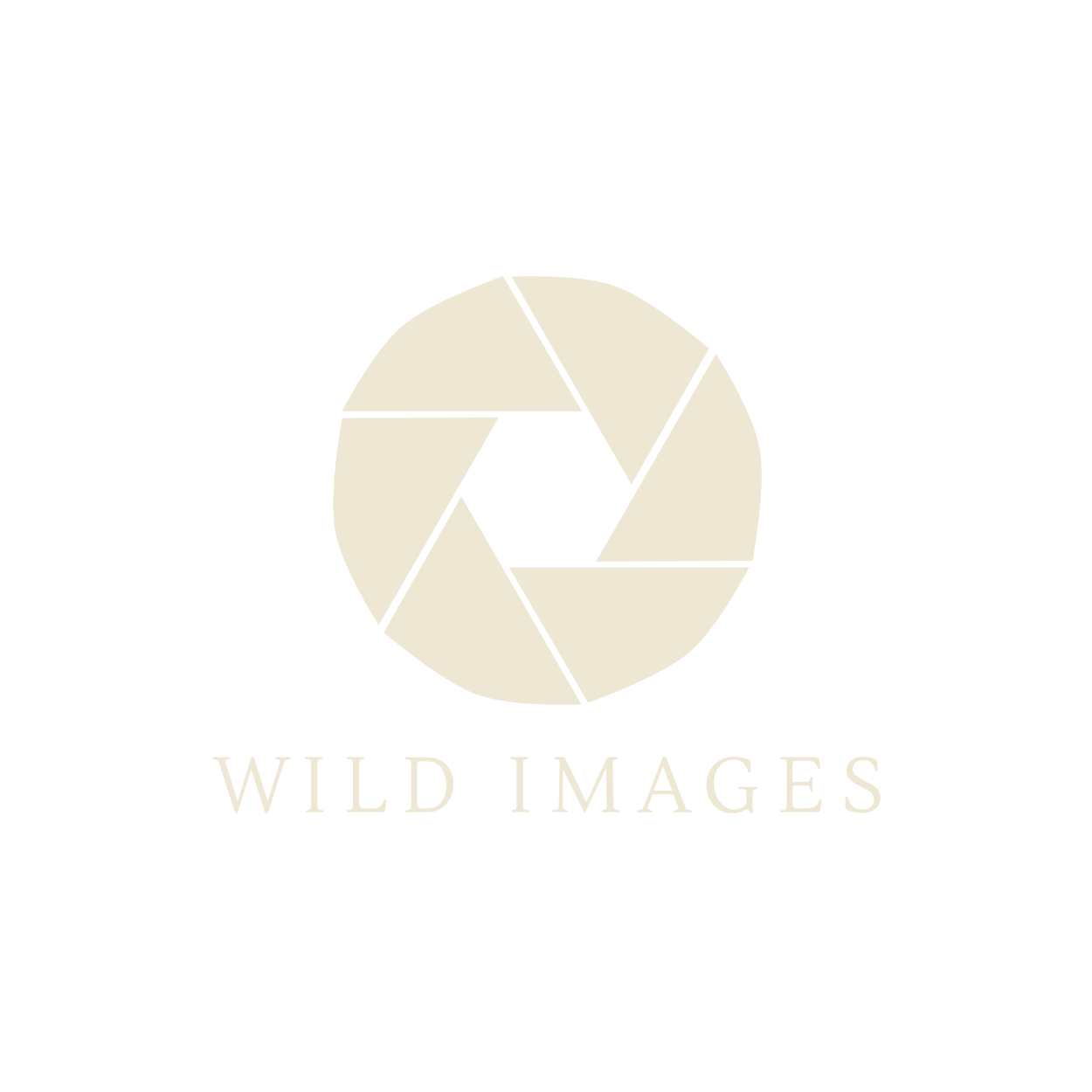 Bird photography of Griffon Vultures with Wild Images Photo Tours