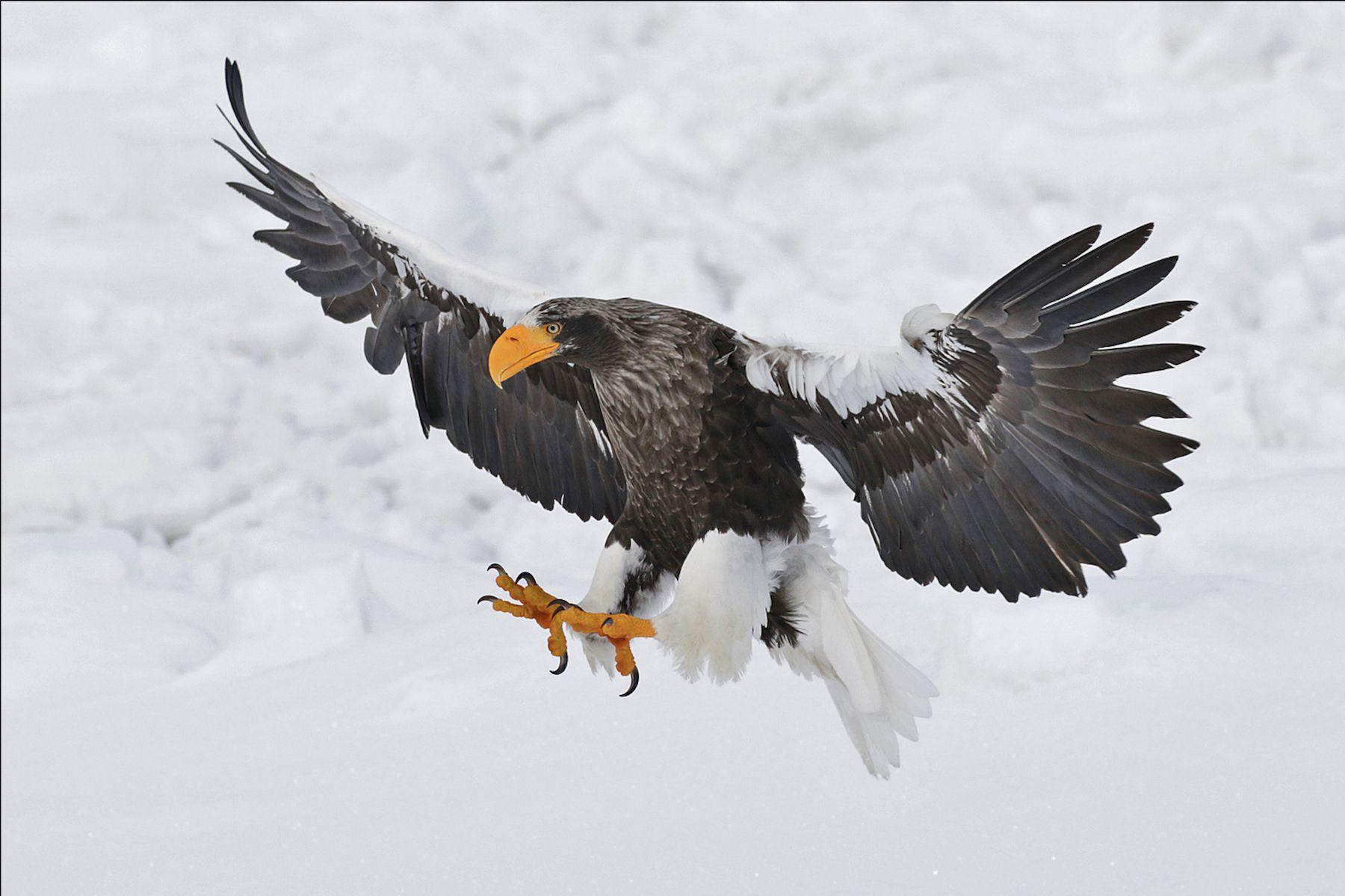 Japan Wildlife Photography Tours - Hokkaido Wildlife Photo Tours