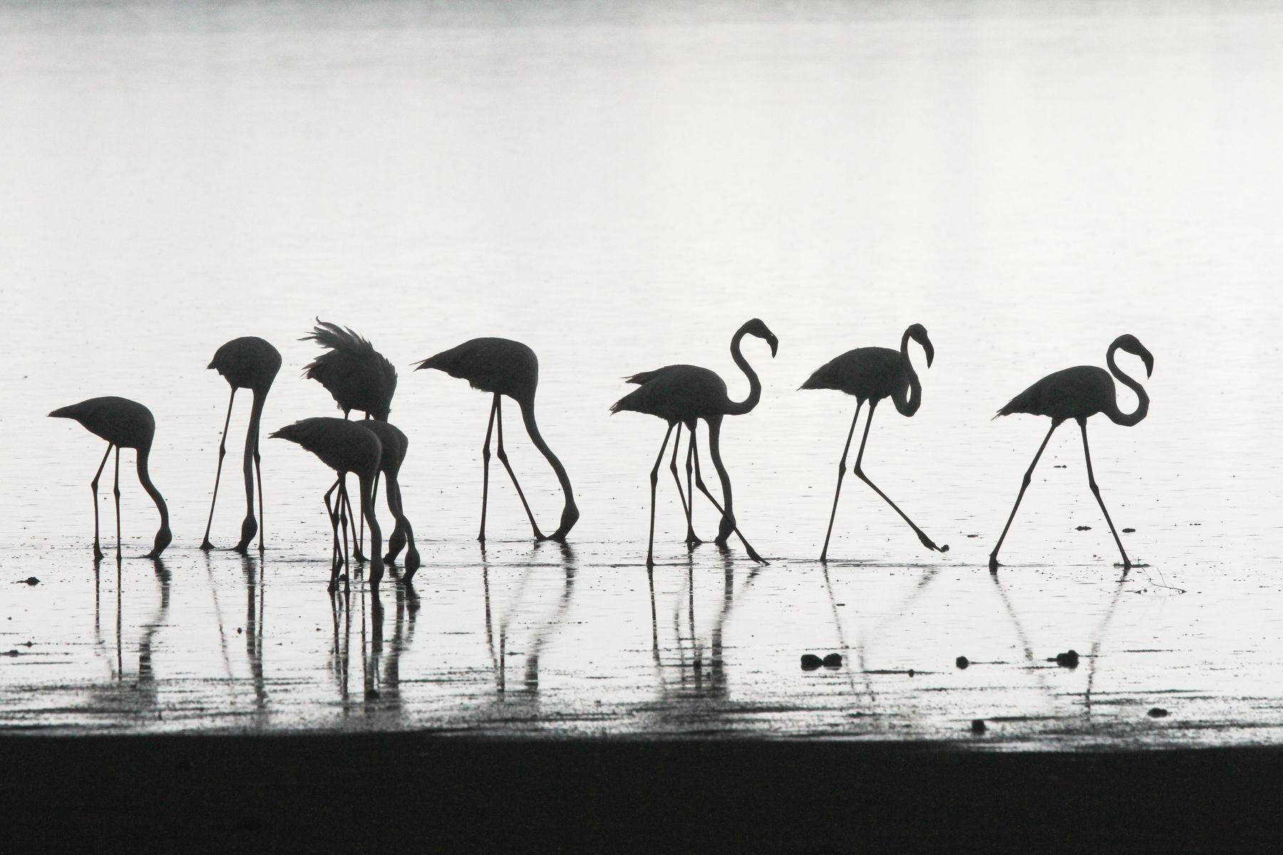 Flamingo silhouettes