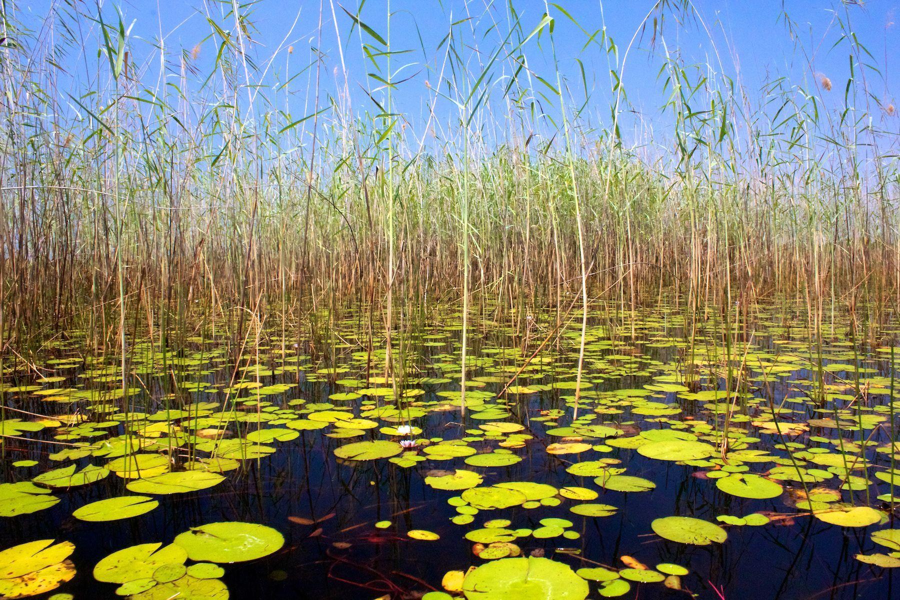 Okavango delta scene